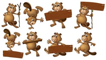 A group of beavers with empty wooden boards