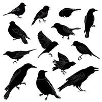 Set of different wild birds silhouette.