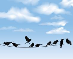 Birds on wires over blue sky background. Wild birds on wire