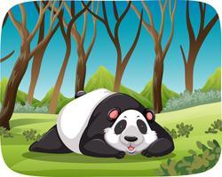 Panda nella scena della foresta