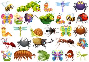 Set of insects white background