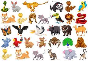 gran conjunto de animales