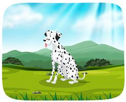 Dalmatian på naturen scen