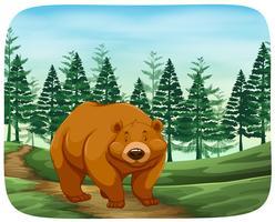 Urso em estado selvagem