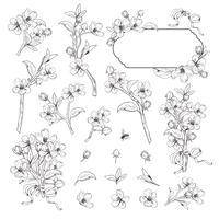 Árbol floreciente Mega set colección. Ramas botánicas dibujadas mano del flor en el fondo blanco. Ilustración vectorial