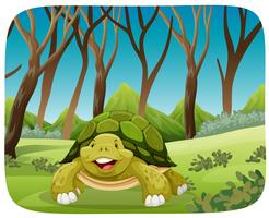cute turtle in forest