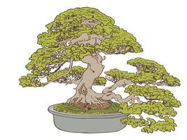 Bonsai träd