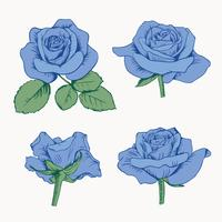 Set collection of blue roses with leaves isolated on white background. Vector illustration