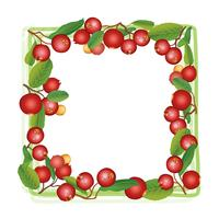 Cranberry summer frame. Berry background. Floral nature food pattern