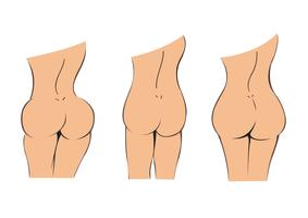 bottom , butt , booty cartoon vector