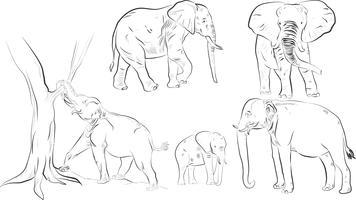 Silhueta de elefante