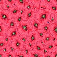 Röda vallmo och tusenskönor sömlösa mönster. Handritning. Vektor illustration