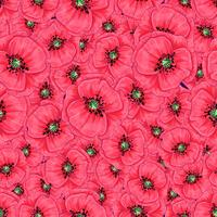 Red poppies and daisies seamless pattern. Hand drawing. Vector illustration