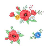 Set of red poppies and daisies. Hand drawing. Vector illustration