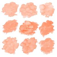 Orange watercolor set on white background, Vector illustration.