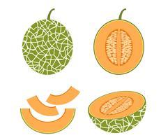 Ilustración vectorial de conjunto melón cantalupo fresco aislado sobre fondo blanco