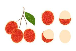 Fresh rambutan fruit vector isolated set on white background - Vector illustration
