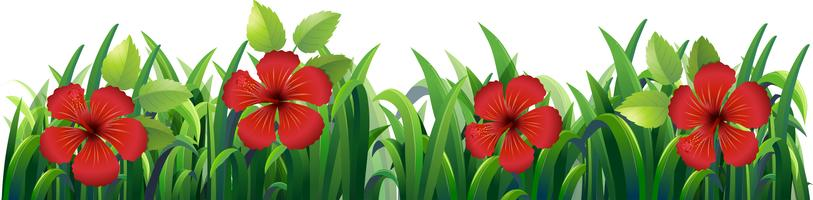 Bougainvillea blommor i buske
