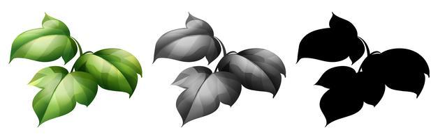 Verzameling van geïsoleerde plant
