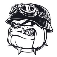 Bulldog biker with helmet