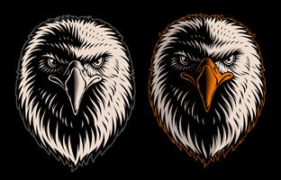 Vector illustration of white head eagle