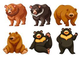 Set van schattige beren