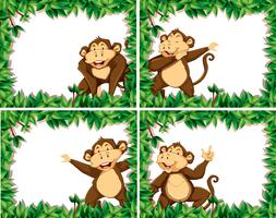 Set av apor i naturramar