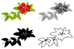 Conjunto de flor de hibisco