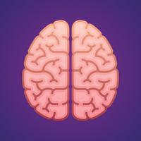 Hémisphères, cerveau, vue dessus, plat, icône, dessin, illustration