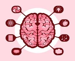 Hemisférios Cerebrais Humanos