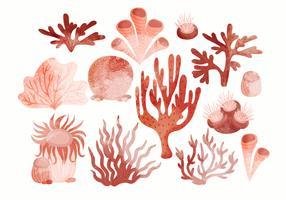 Vektor-Hand gezeichneter Satz Korallen