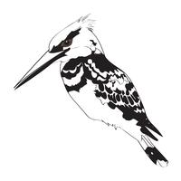 King Fisher Black and White