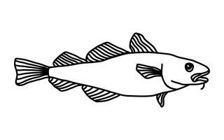 Torsk Fiskillustration