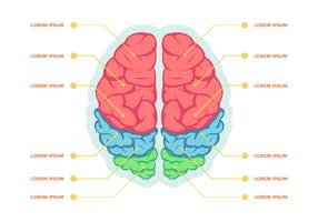 Modelo de vetor de infográfico de hemisférios cerebrais humanos