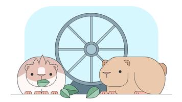 Vecteur cochon inde