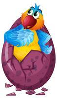 Macaw bird hatching egg