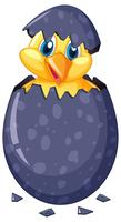 Little chick hatching egg vector