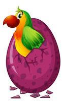 Green parrot hatching egg