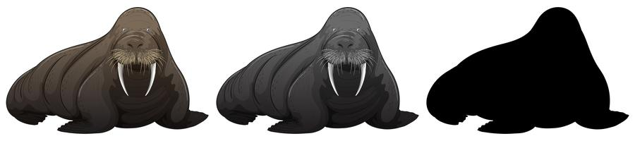 Set of walrus character