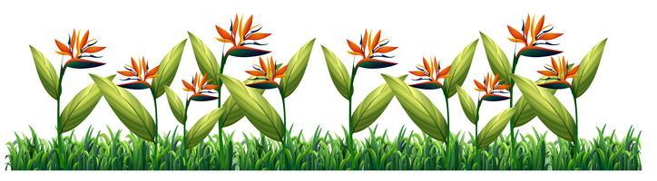Modello di fiore uccello del paradiso
