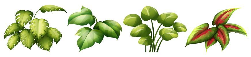 Conjunto de planta de hoja