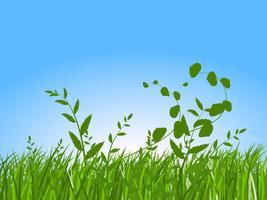 grünes Gras am Morgen