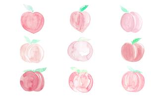 Peach watercolor drawing isolated on white background.