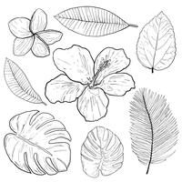 Tropical flowers and leaves doodles hand drawing vector.