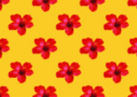 Hibiscus flower tropical background vector illustration.