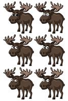 Moose with different facial expressions