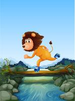Lion patinant dans la nature