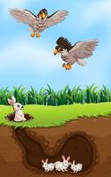 An eagle hunting rabbit