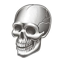 Vector illustration of a black and white skull