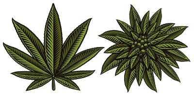 Illustration vectorielle de cannabis leafs